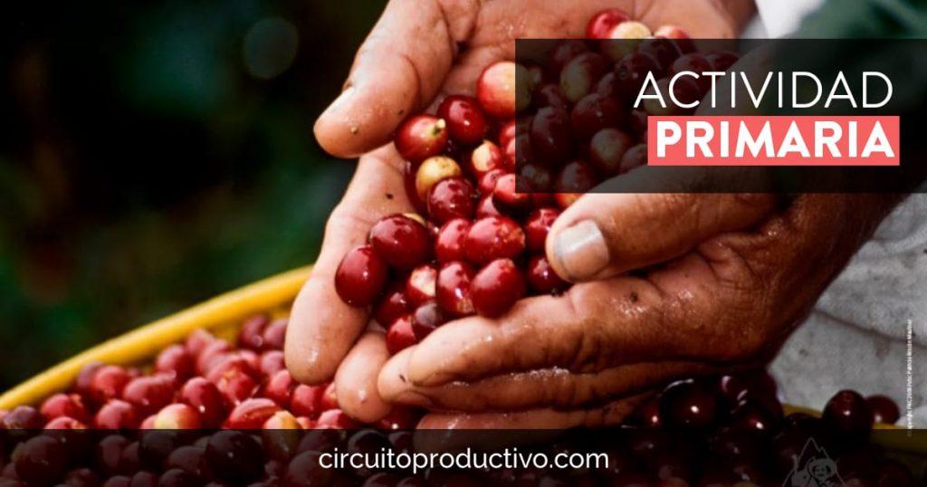 Actividad Primaria de los circuitos productivos