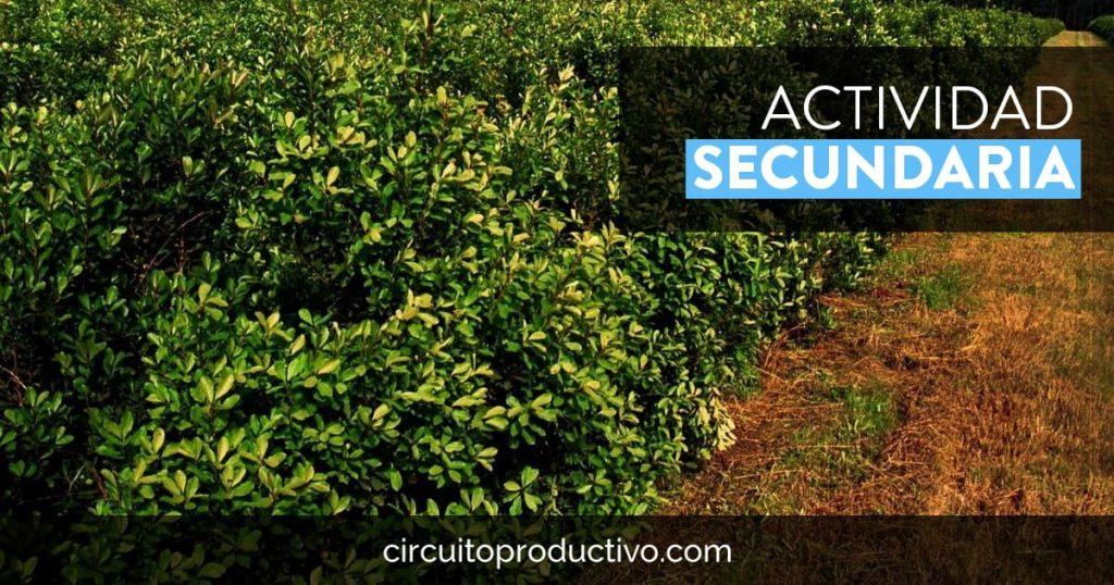 Actividad secundaria de los procesos productivos