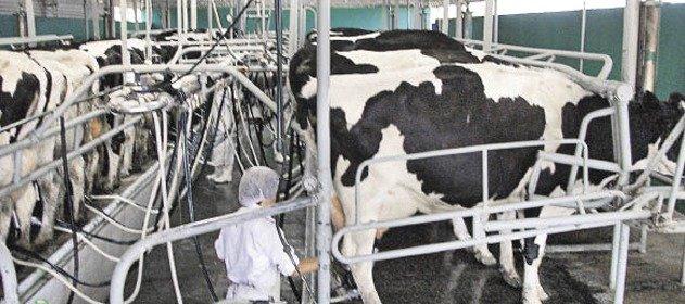 Circuito productivo de la leche