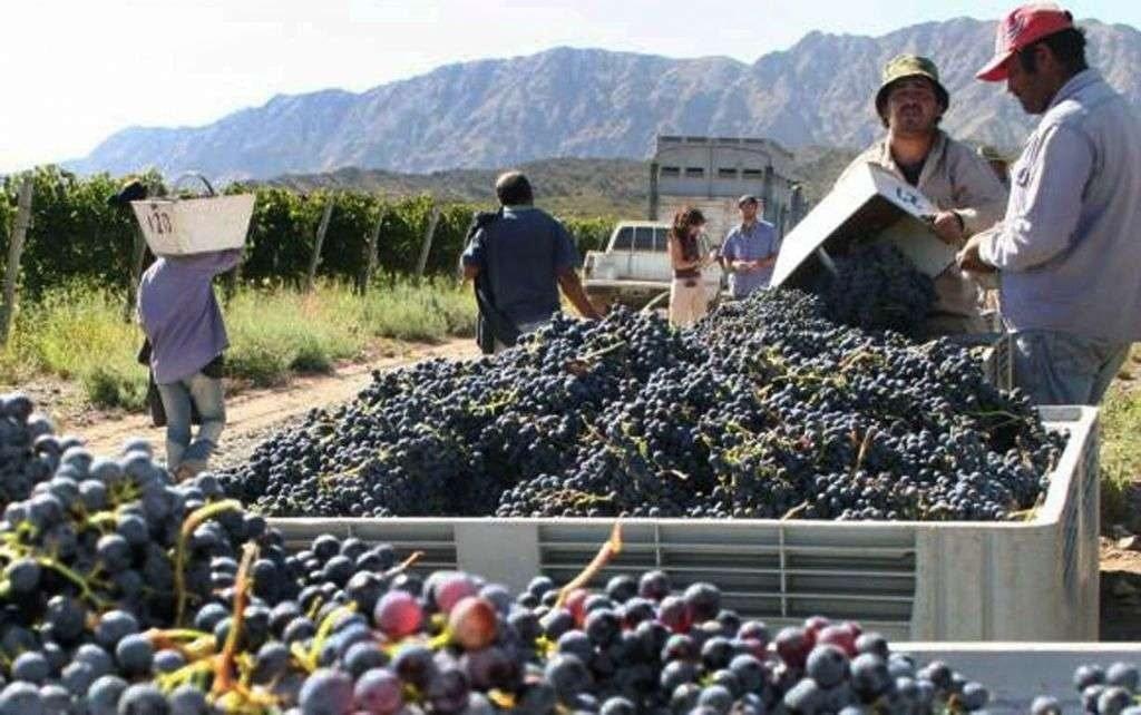 Circuito productivo de la vid y circuito productivo de la uva