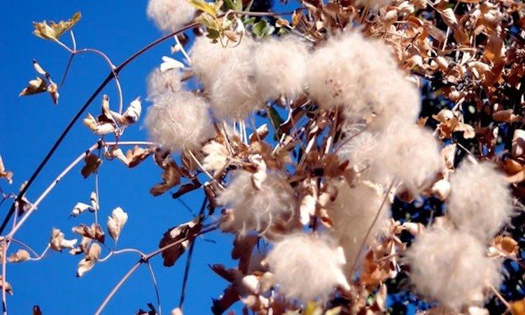 Circuito productivo del algodon