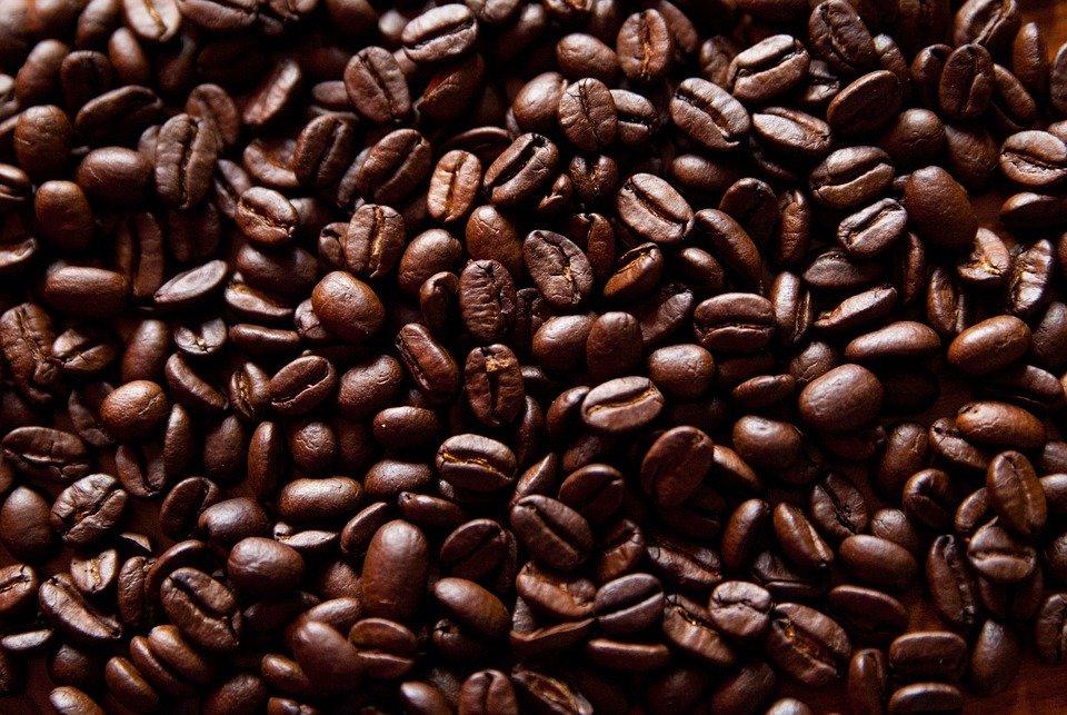 Circuito productivo del cafe