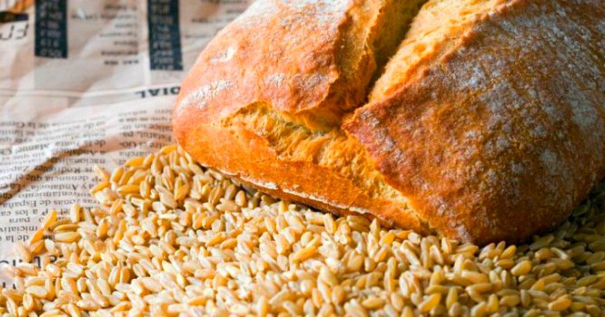 Produccion de trigo