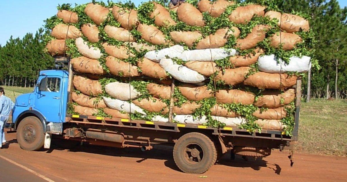 Transporte de la yerba