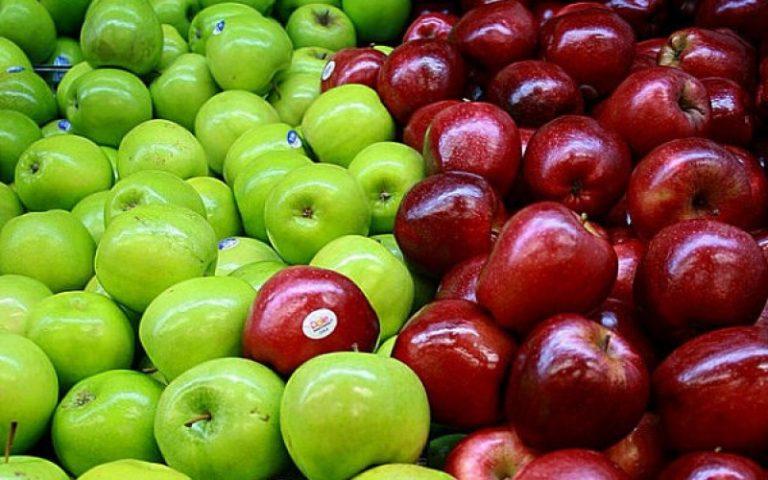 Circuito productivo de la manzana
