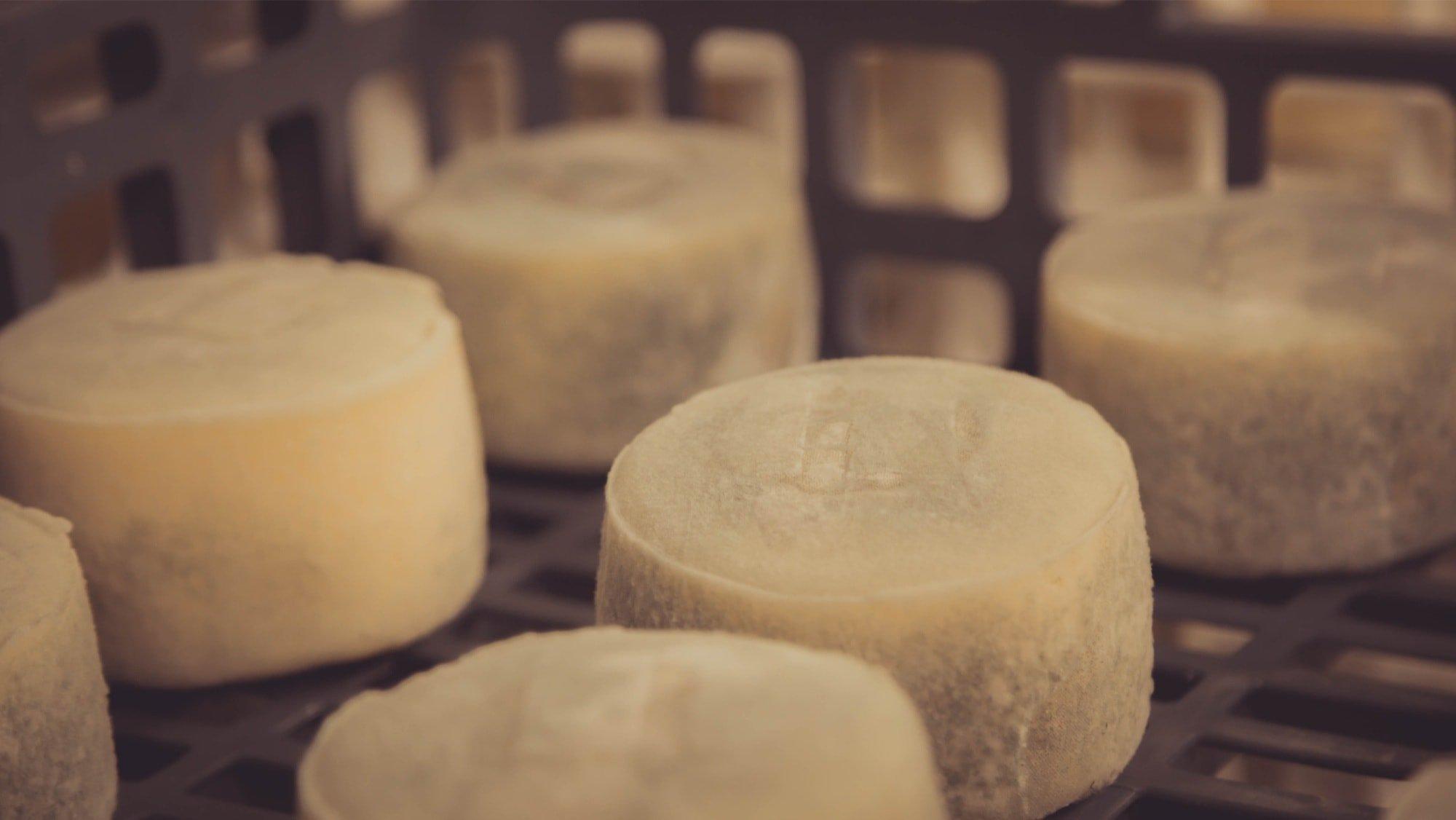 Prensado del queso