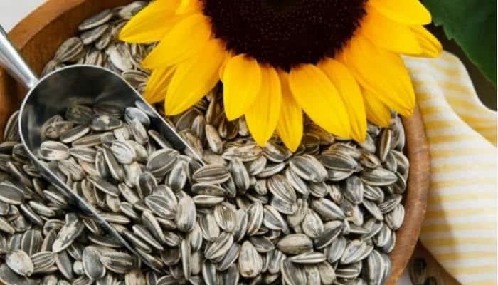 semillas de girasol obtencion