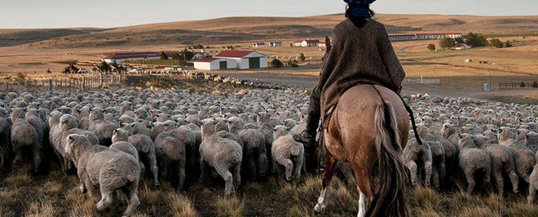 Ganadería en Argentina Realidad, problemas y factores claves del sector