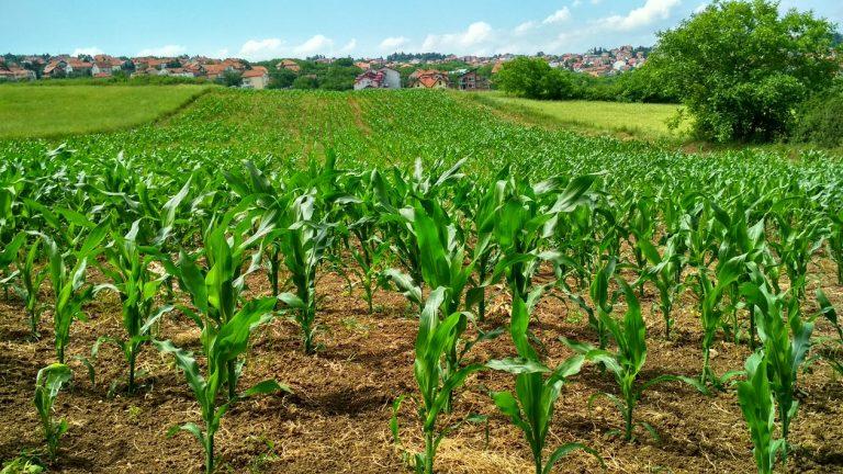 Agricultura Ecológica: Qué es y para qué sirve? [2020]